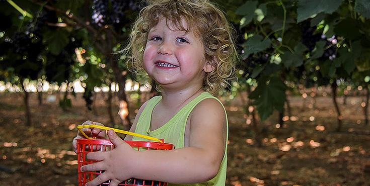 קטיף ענבים עצמי – אקשן פארק מושב לכיש