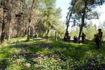 סיור ביער המלאכים